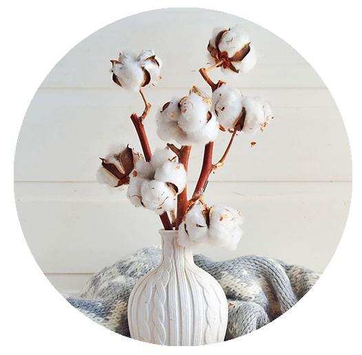 Flor algodón